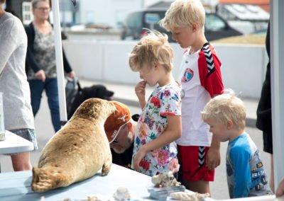 Børn kigger på sæl - Muslingefestivalen