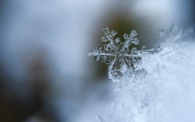 Winter Week